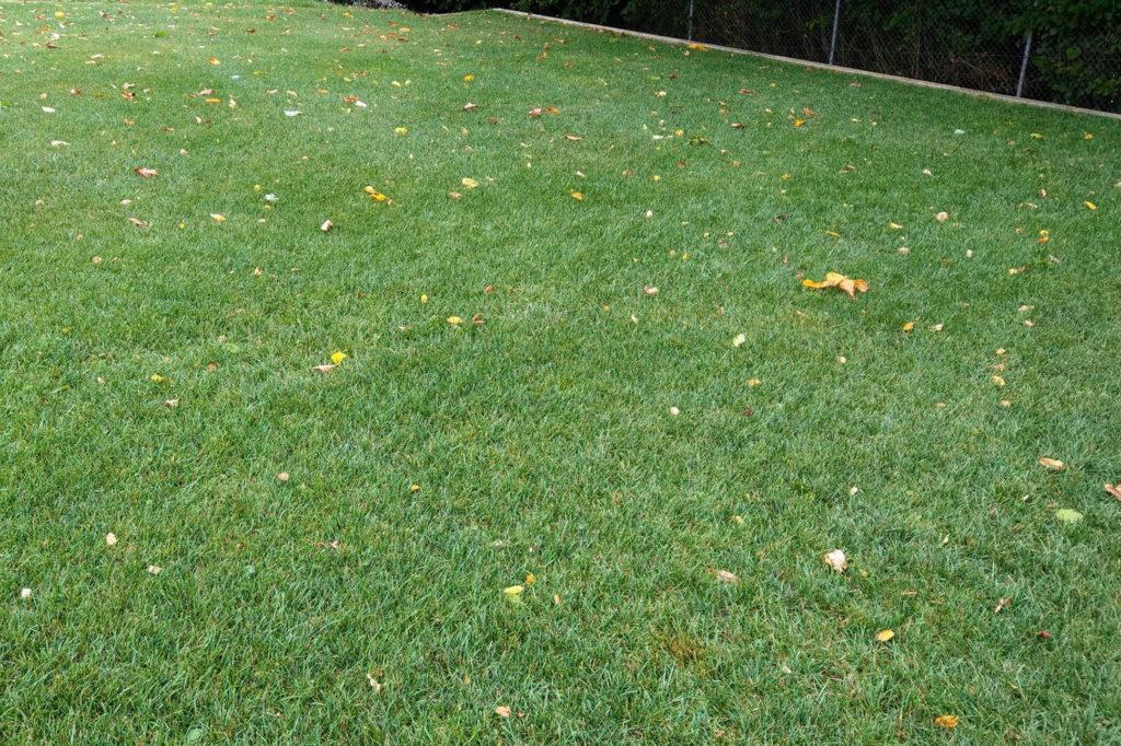 Lauf auf dem Rasen